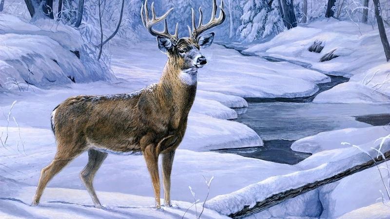 Год диких животных: Сибирь