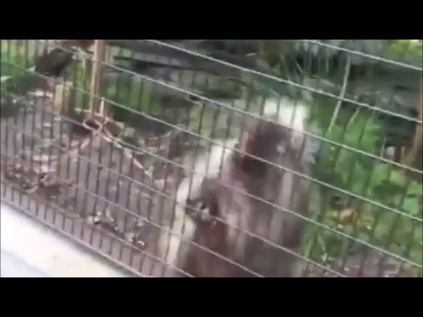 Porcupine hits the milly rock for world unity
