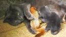 Mama Cat Adopts 4 Orphaned Baby Squirrels