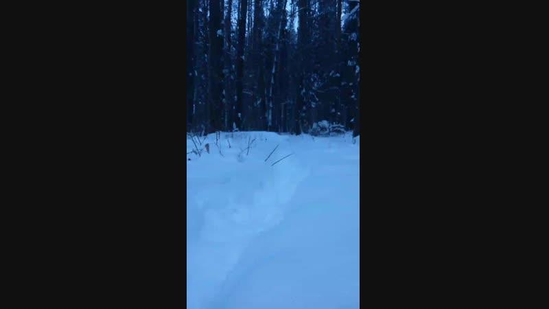 Встречать рассвет в лесу Рэмик