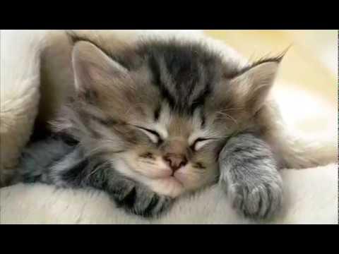 Добрый вечер Доброй ночи Красивая музыкальная видео открытка Поздравление Поздравляю