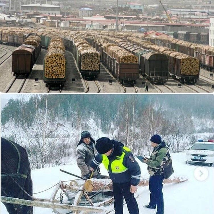 Сотрудники лесничеств КЧР похитили лес на 1,5 млн
