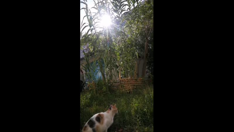 Тростниковые котэ