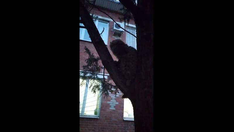 Больную кошку обижает местный авторитет