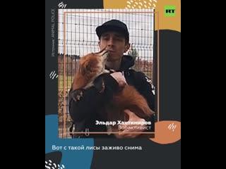 Спасение животных