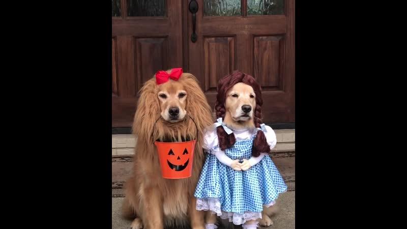 Костюм на Хэллоуин Animal Planet