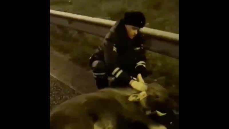 В Татарстане автоинспекторы освободили лося