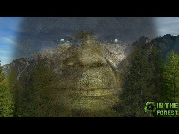 BIGFOOT In The Forest Documentary Part 2