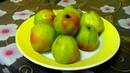 Яблоки сорт северный синап