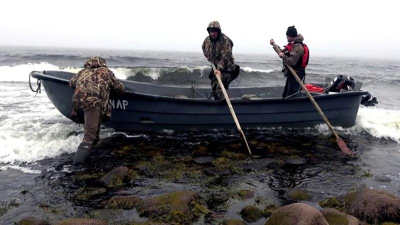 Киты белухи и наше путешествие по северу республики Карелия. Рыбалка на треску и охота.