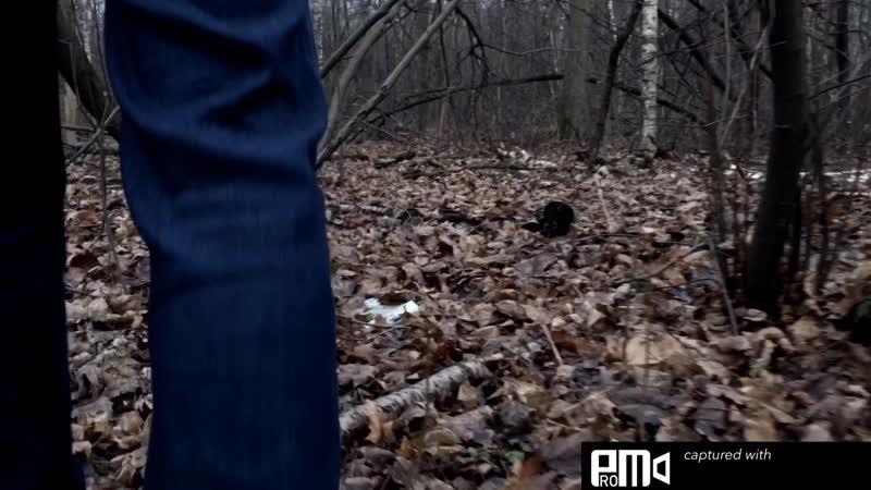 Танец горца в лесу