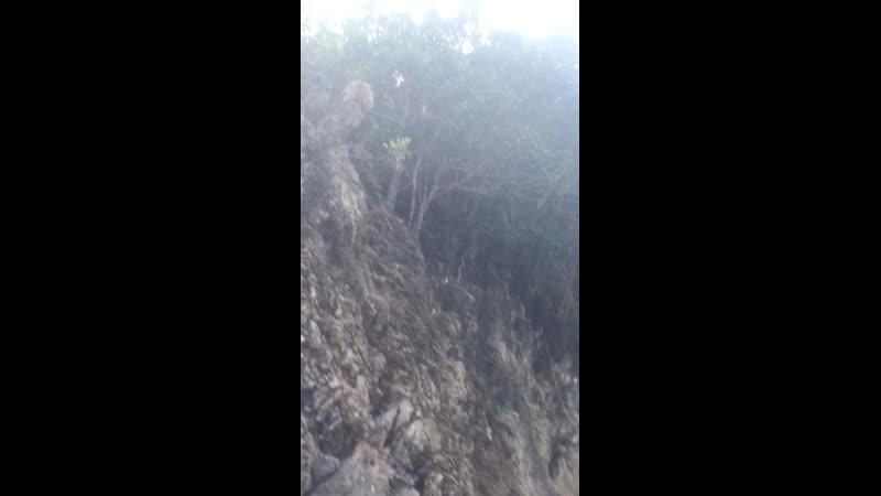 Холм обезьян 🐒😀
