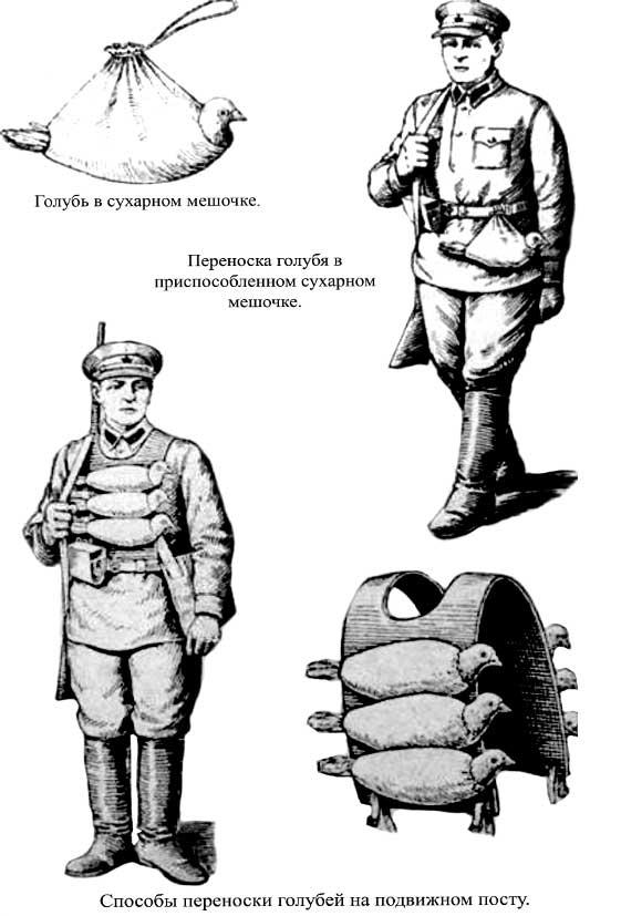 Голуби в РККА