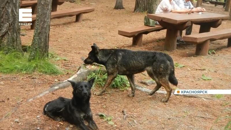 Бродячие собаки оккупировали нацпарк Красноярские столбы