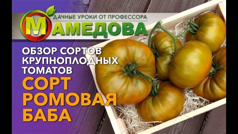 🍅 Обзор сортов крупноплодных томатов. Сорт Ромовая Баба