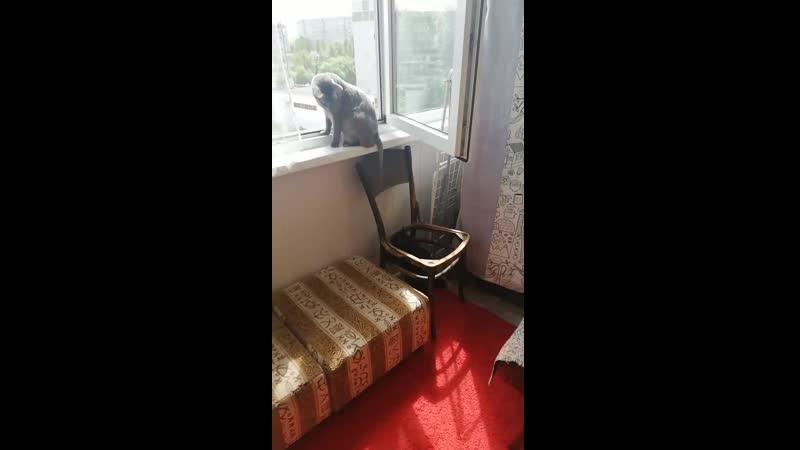 Парас и Зинка на балконе.
