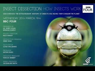 Вивисекция. как устроены насекомые / insect dissection: how insects work