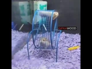 GIFKAWOOD   Ноябрь 2019 лучшие видео приколы смешные свежие новинки самые топ смотреть интересные веселые животные котики