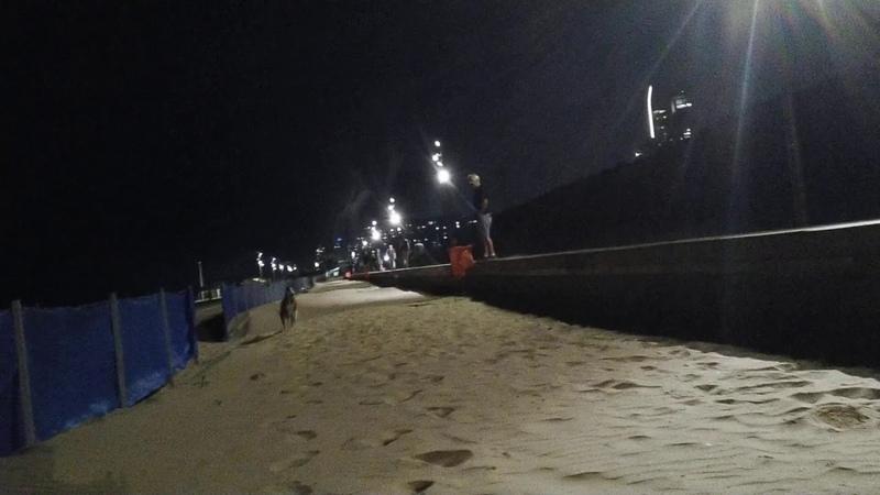 Декстер на пляже / Dexter on the beach (1)