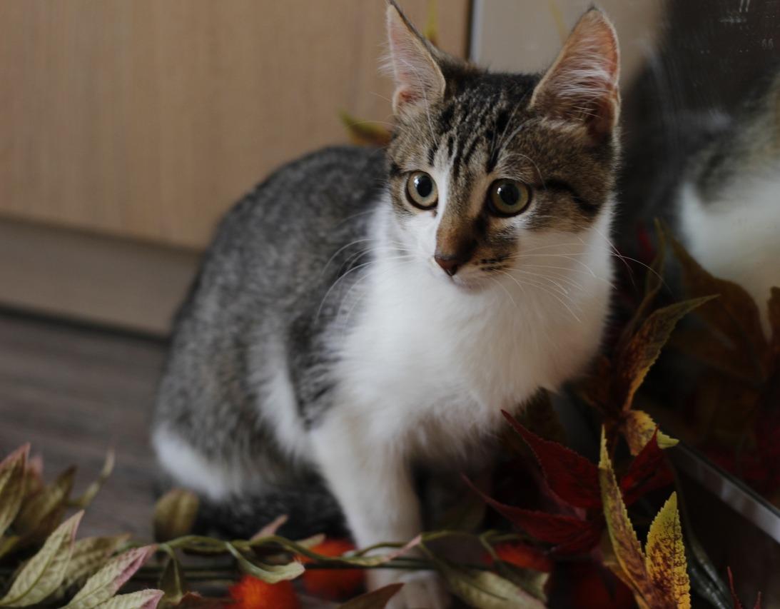 ❗Москва и МО❗Пост-шанс  Осенний котопад никто не