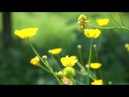 BINECUVANTARE - Traieste clipa / nature and relaxing sounds