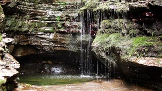 Relaxing Forest Waterfall Sound-Nature Sounds-Calm Birdsong For Sleep-Study-Meditation-Relaxation