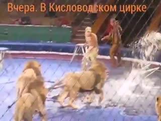 #necro_tv: В Львове в цирке взбунтовались львы