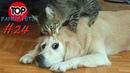 ПРИКОЛЫ 2019, ТОП СМЕШНЫХ ВИДЕО С КОТАМИ/Смешные животные/Смешные кошки/TOP FUNNY PETS 24