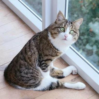 Fh DhJYkPXk - Лучшие коты интернета на этой неделе