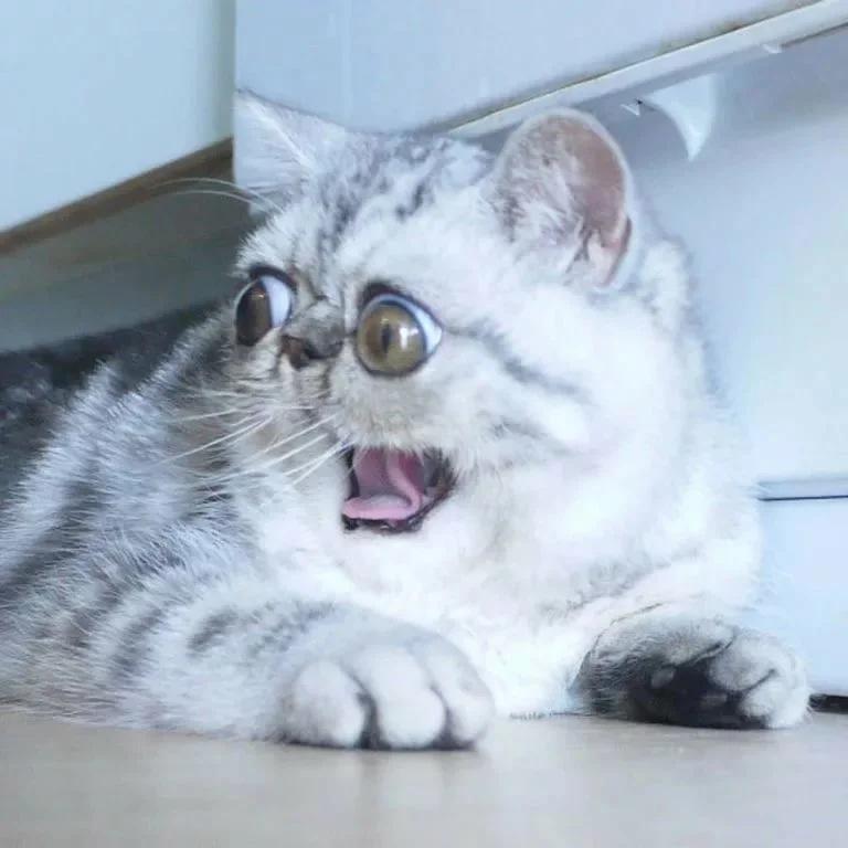 2hnbjcMG1PY - Лучшие коты интернета на этой неделе