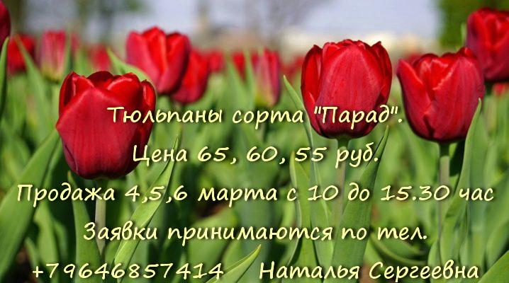 Продажа тюльпанов к 8 Марта в ПАБСИ.