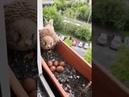 Kestrel with eggs outside a window
