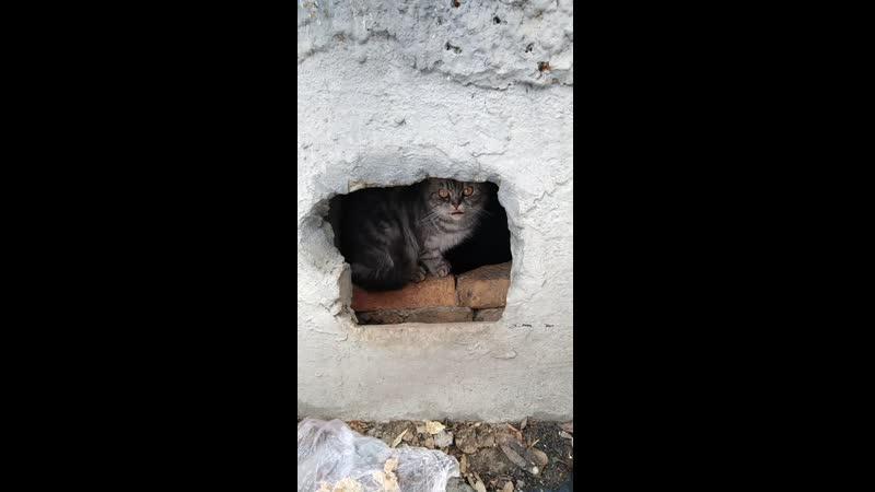 потерялся породистый котик