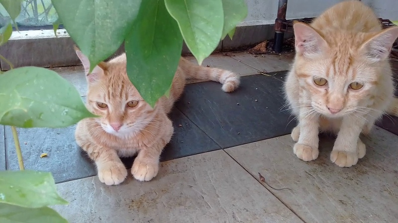 Today the cats are 662 days old, and ,the babies are 182 , new kittens are 35 days old