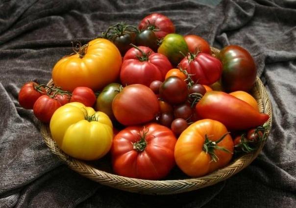 Что говорит цвет томатов об их вкусе