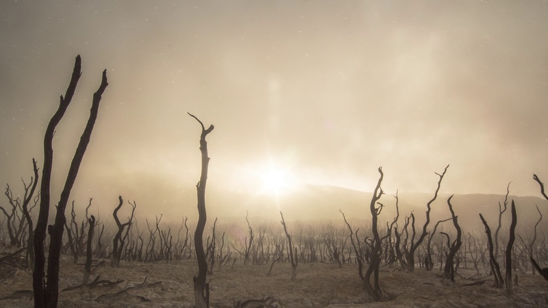 Desert Dust and Dry Tress Living Background| Free HD Stock Footage