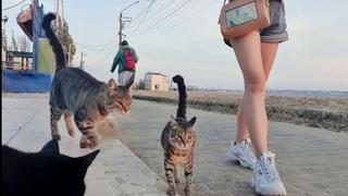 Пляж который принадлежит кошкам - влог -