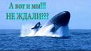 Российская подлодка с крылатыми ракетами Калибр , вынырнула в Босфоре