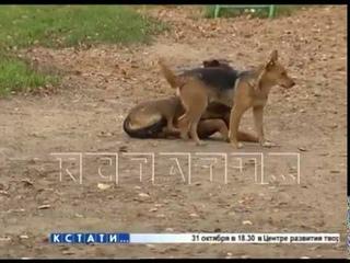 Жительница Автозавода, пытаясь вылечить бездомную собаку, снискала славу живод