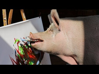 Painting sowPigcassohogs the limelight at South Africa farm