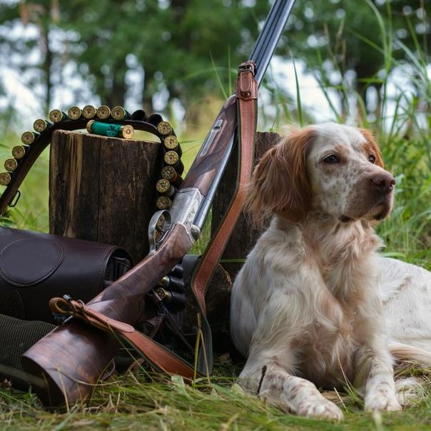 Картинка доброе утро охотники