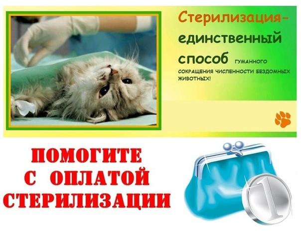 Картинка оплата стерилизации