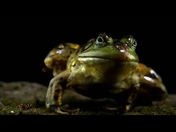 Яд Достижение эволюции Poison an evolutionary mystery 2015 Эпизод 2