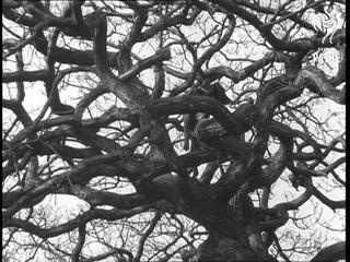 Dog Climbs Tree (1969)