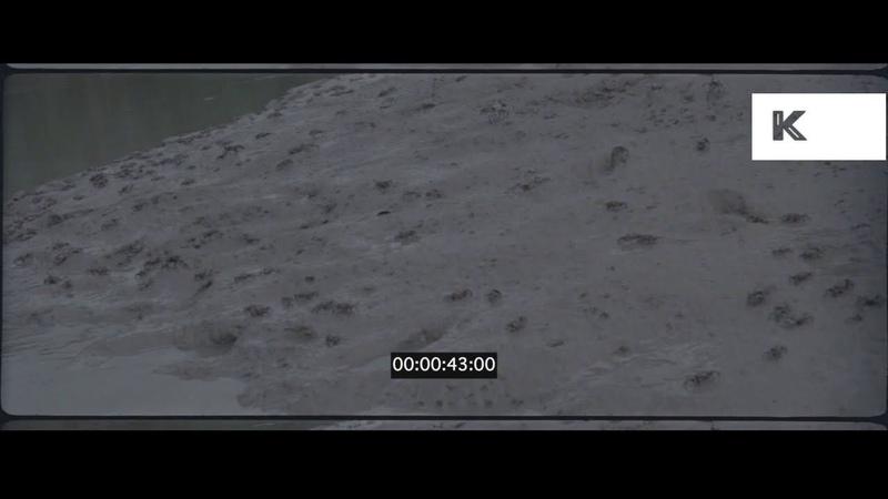 1980s Crabs On Sandy Beach 35mm