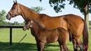 Top Sprinter Broodmare Artemis Agrotera and her Arrogate Foal