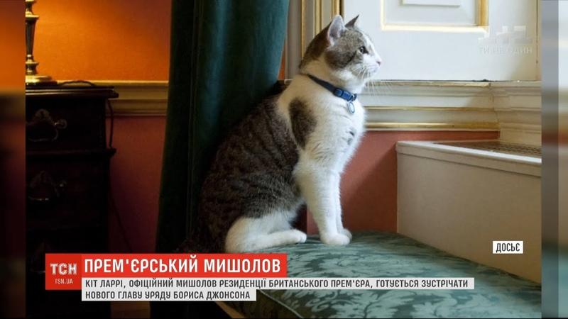 Британський урядовий кіт Ларрі готується зустрічати нового прем'єра