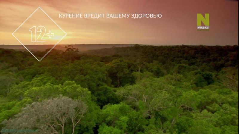 Дикая Латинская Америка 1 Амазония Один лес много миров Познавательный природа животные 2012