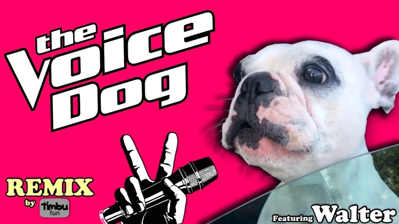 The Voice Dog Remix By Timbu Fun feat Walter Geoffrey The Frenchie