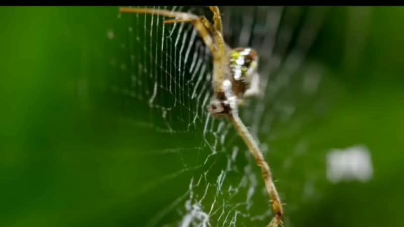 в мире дикой природы самка паука по́рша